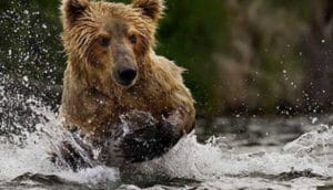 alaska escorted tour icy strait point